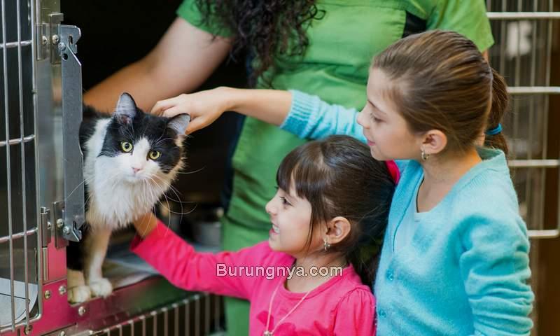 Cara Membeli Kucing Import Online (lovetoknow.com)