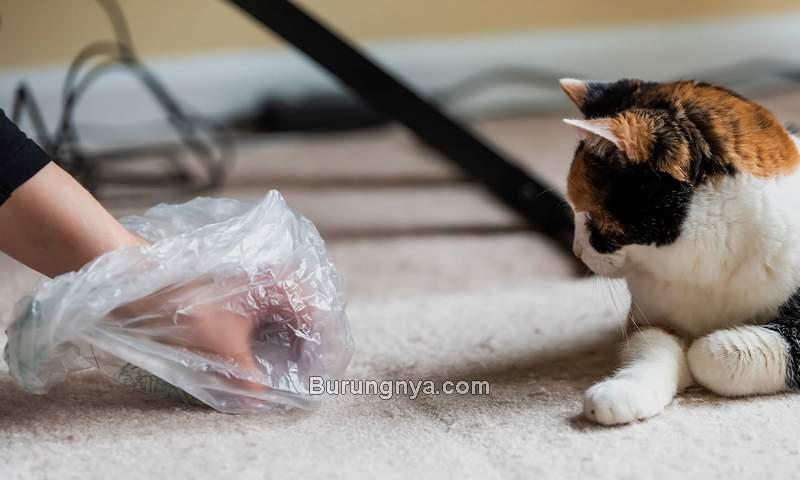 Cara Membersihkan Kotoran Kucing sampai Bersih (excitedcats.com)