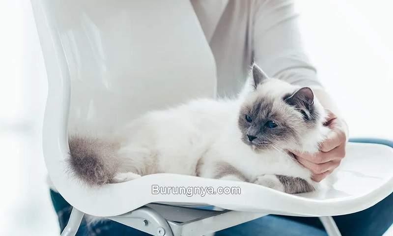 Cara Mencegah Kucing Betina Hamil (advancedpetvet.com)