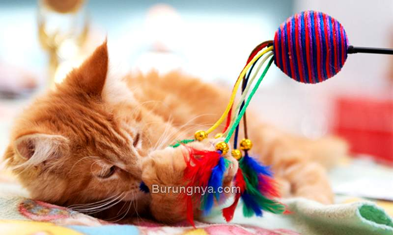 Jenis Mainan Kucing Terbaik (petguide.com)