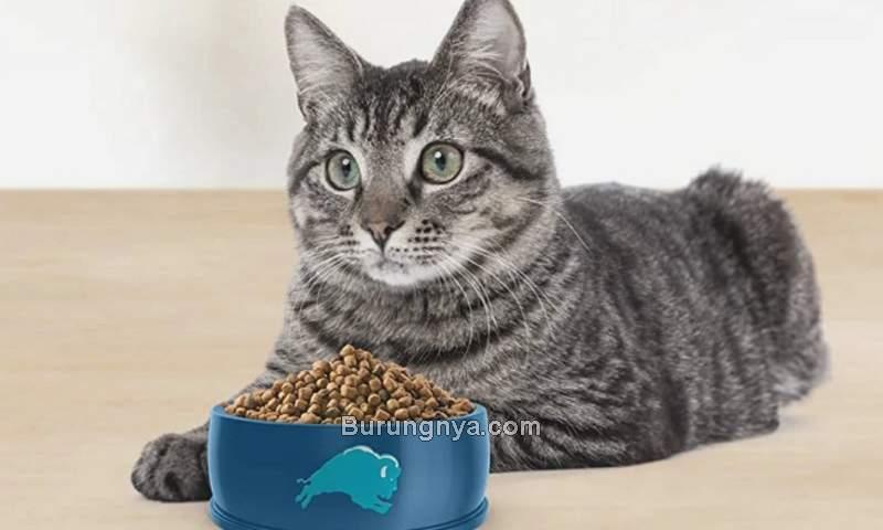 Kesalahan Perawatan Kucing (hip2save.com)