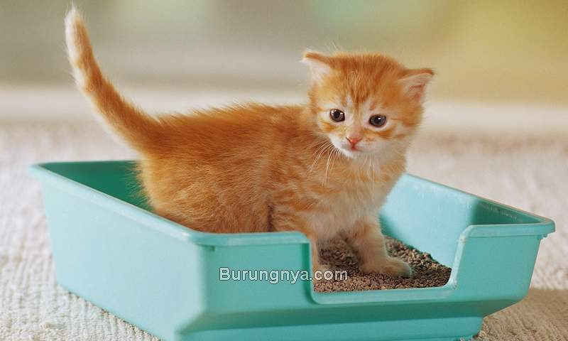Litter Box Kucing (webmd.com)