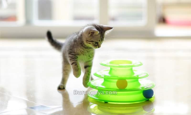 Mainan Kucing Terbaik (marthastewart.com)