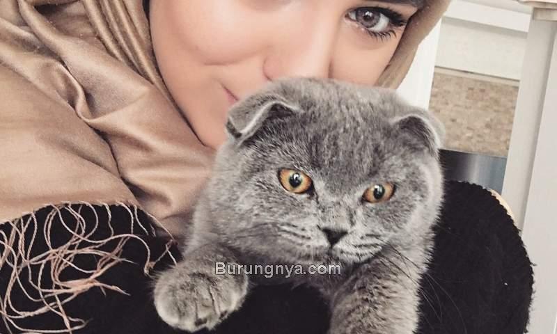 Manfaat Memelihara Kucing dalam Islam (weheartit.com)