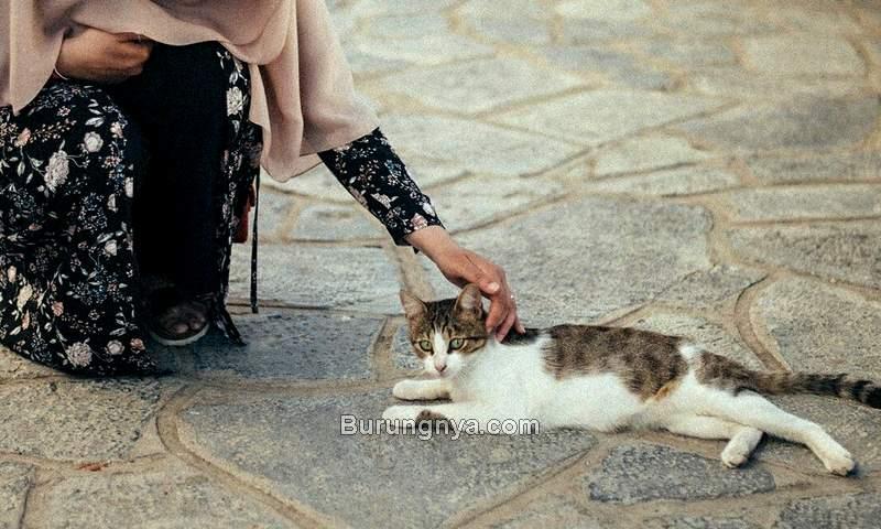 Pahala dan Manfaat Memelihara Kucing dalam Islam (pinterest.com)
