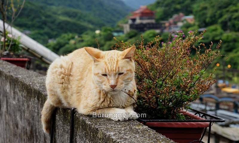 Tips Merawat Kucing Kampung (befreetour.com)