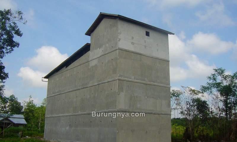 Bisnis Sarang Burung Walet Buat Rumah Walet (kuansingkita.com)