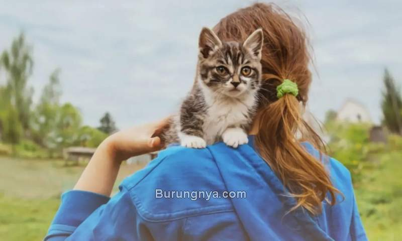 Cara Adopsi Kucing dari Shelter (mentalfloss.com)