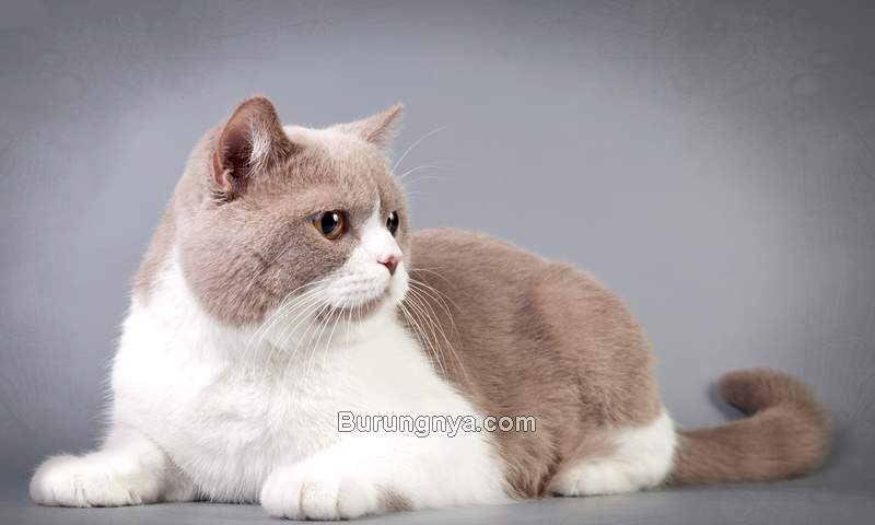 Cara Bikin Kucing Jadi Gembul (youtube.com)
