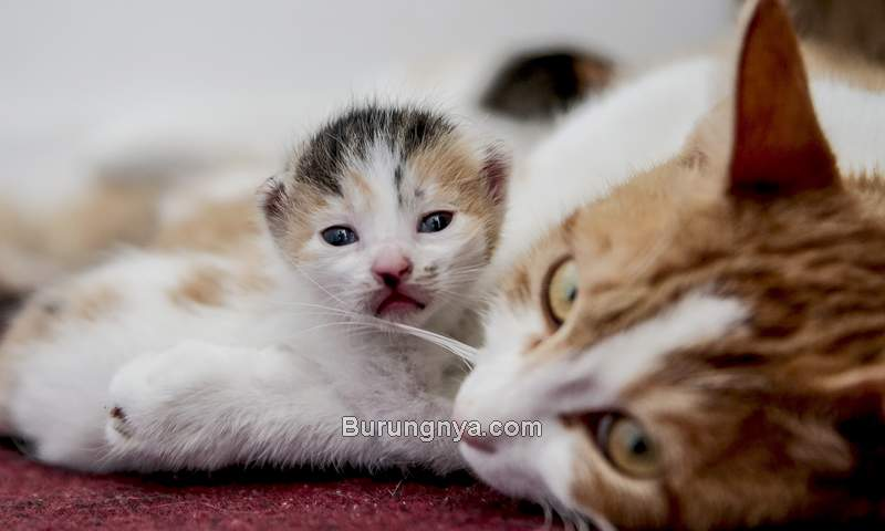 Cara Memisah Anak Kucing dan Induk Kucing untuk Diadopsi (people.com)