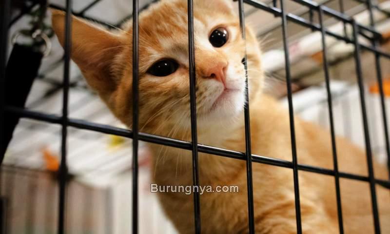 Cara Mengadopsi Kucing (insight-egypt.com)