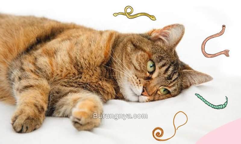 Cara Mengobati Kucing Cacingan (petcareclub.com)