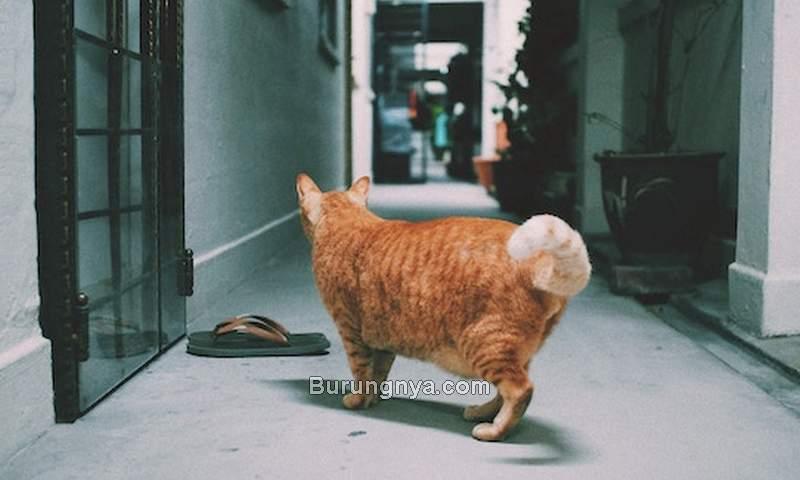 Kucing Kurus Perut Besar (litter-robot.com)