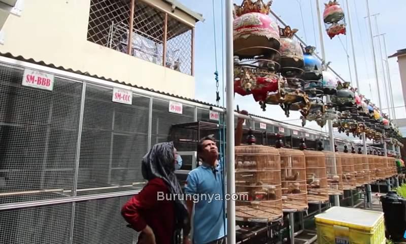 Perkutut Rp 300 Juta dan Sangkar Rp 15 juta (youtube.com)