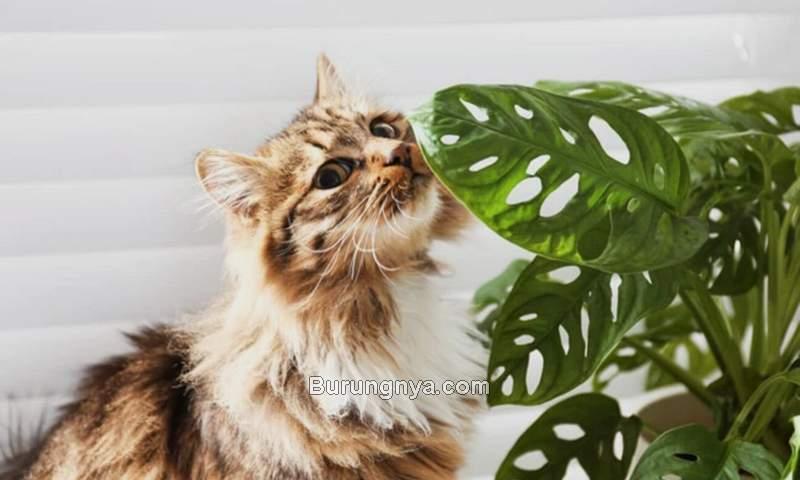 Tanaman Berbahaya Untuk Kucing (filmdaily.co)