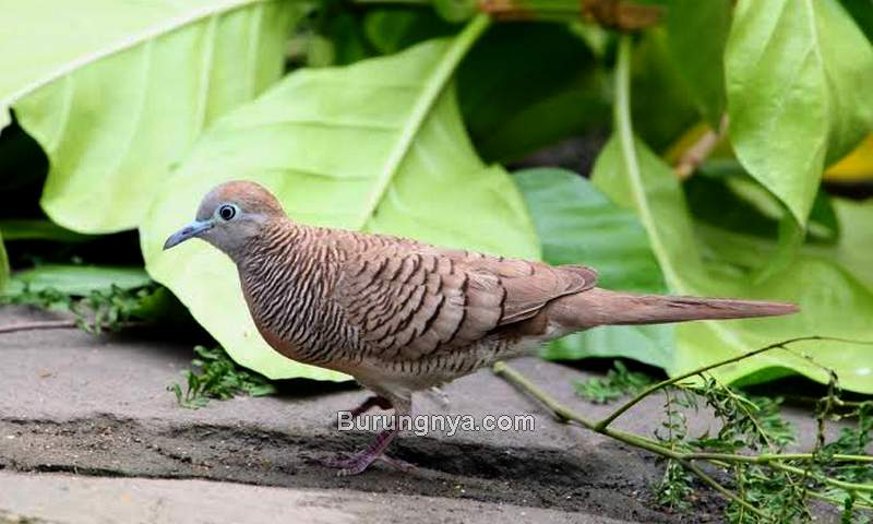 Alasan Burung Masuk Rumah (50webs.com)