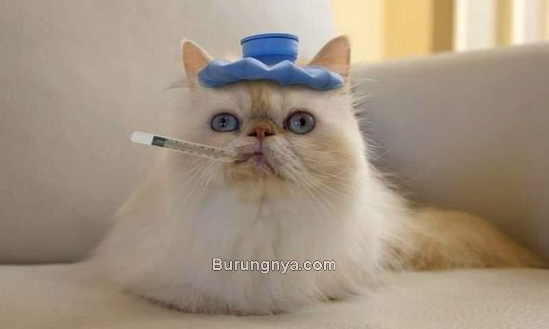 Cara Merawat Kucing Demam dan Panas (pinterest.com)