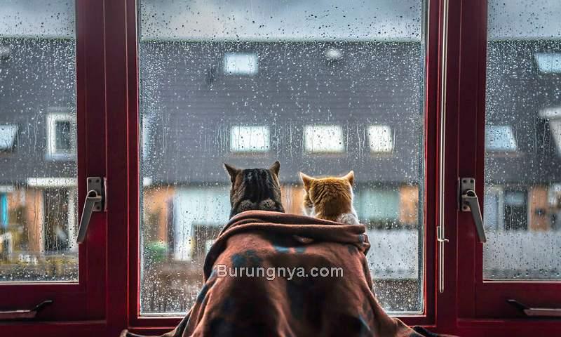 Cara Merawat Kucing di Musim Hujan (sortra.com)