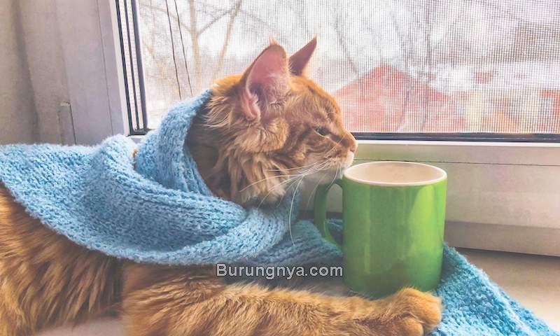 Kucing Demam Panas (catster.com)