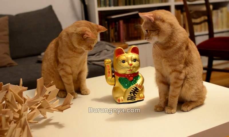 Kucing Pembawa Rezeki, Hoki, dan Keberuntungan (youtube.com)