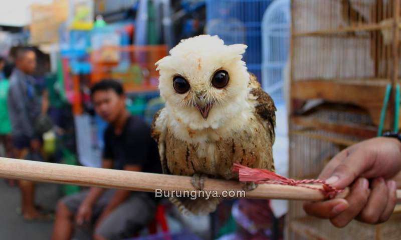 Pasar Burung Terbesar di Indonesia (pinterest.com)