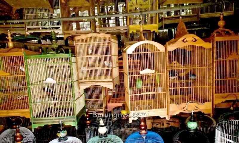 Pasar Burung yang Jual Burung Dilindungi (noforeignlands.org)