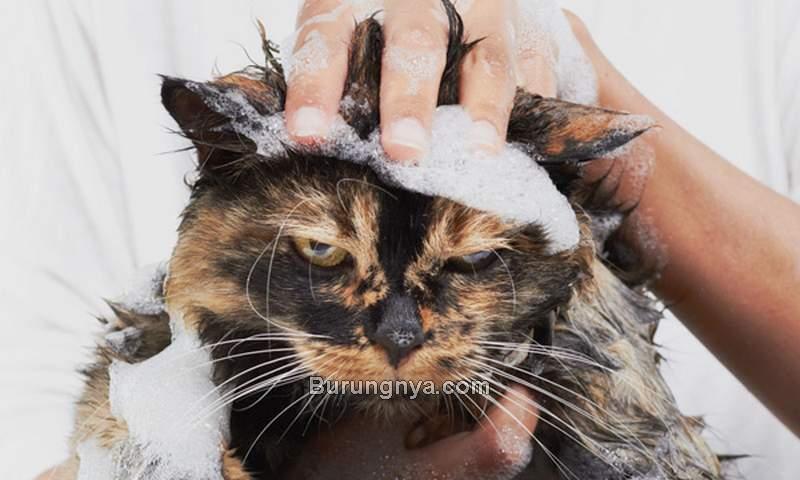 Shampo Manusia yang Boleh untuk Kucing (espressothinker.com)