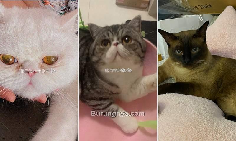 Tiga Kucing Dibunuh karena Positif COVID19 (globaltimes.cn)